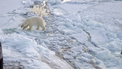 Slider_Polar_bears_near_north_pole.jpg