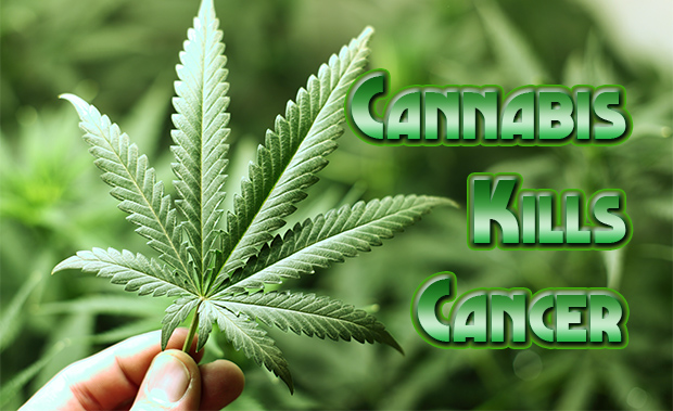 cannabis-kills-cancer-article.jpg