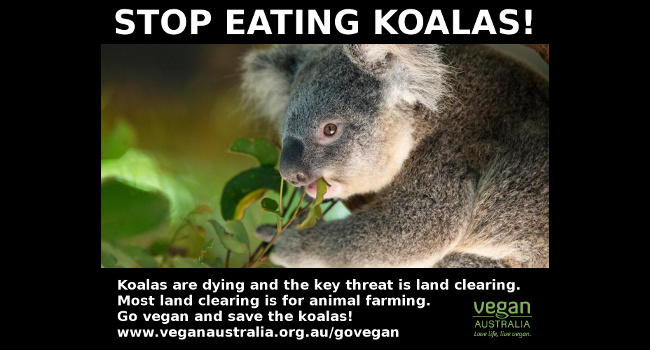 Animal agriculture is major threat to koalas - Vegan Australia