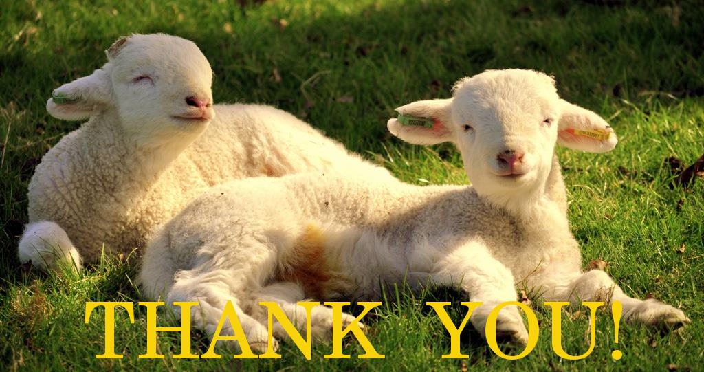 stockvault-lambs-122647.jpg