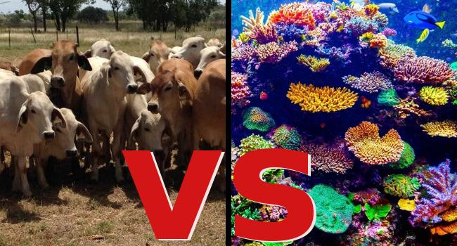 Vegan farmed animal sanctuaries - Vegan Australia