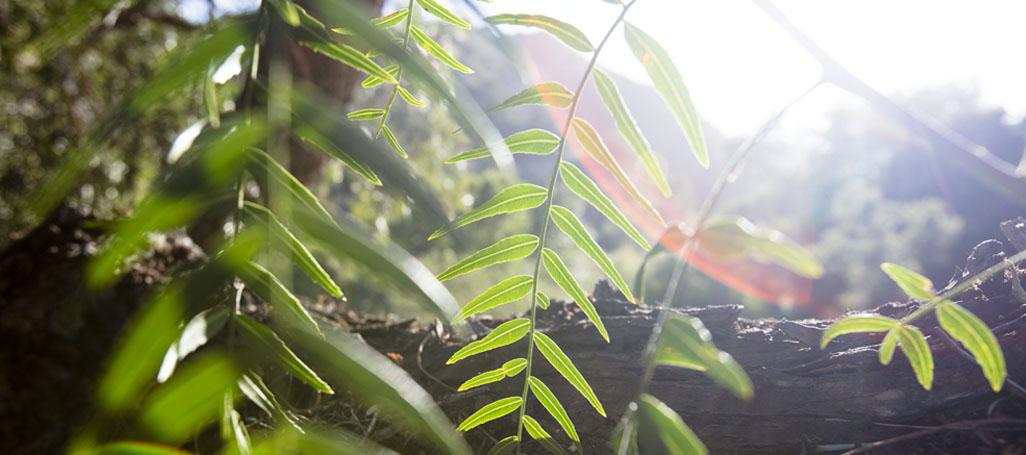 Sunlightandleaves.jpg