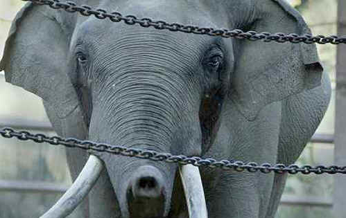 elephants_captivity.jpg