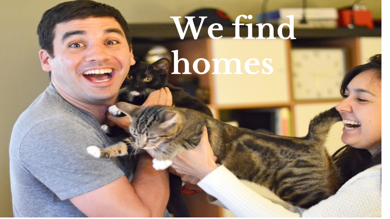 We Find Homes