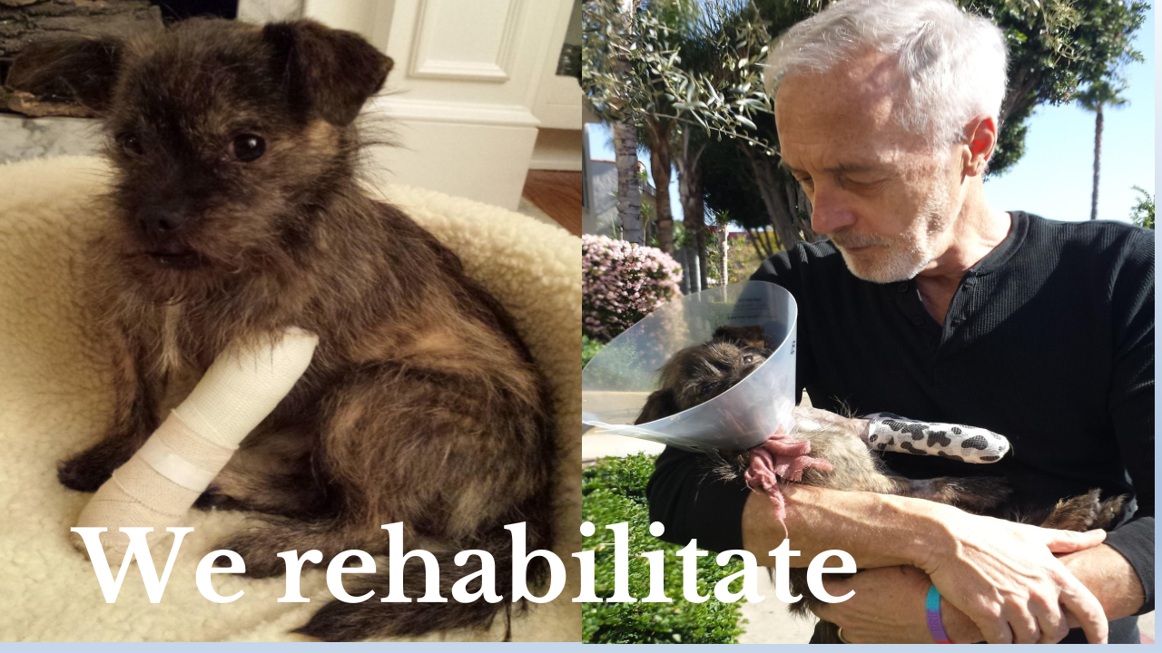 We Rehabilitate