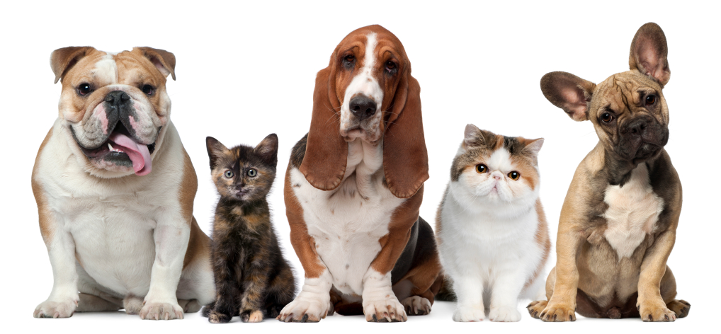 dogs-and-cats.jpg