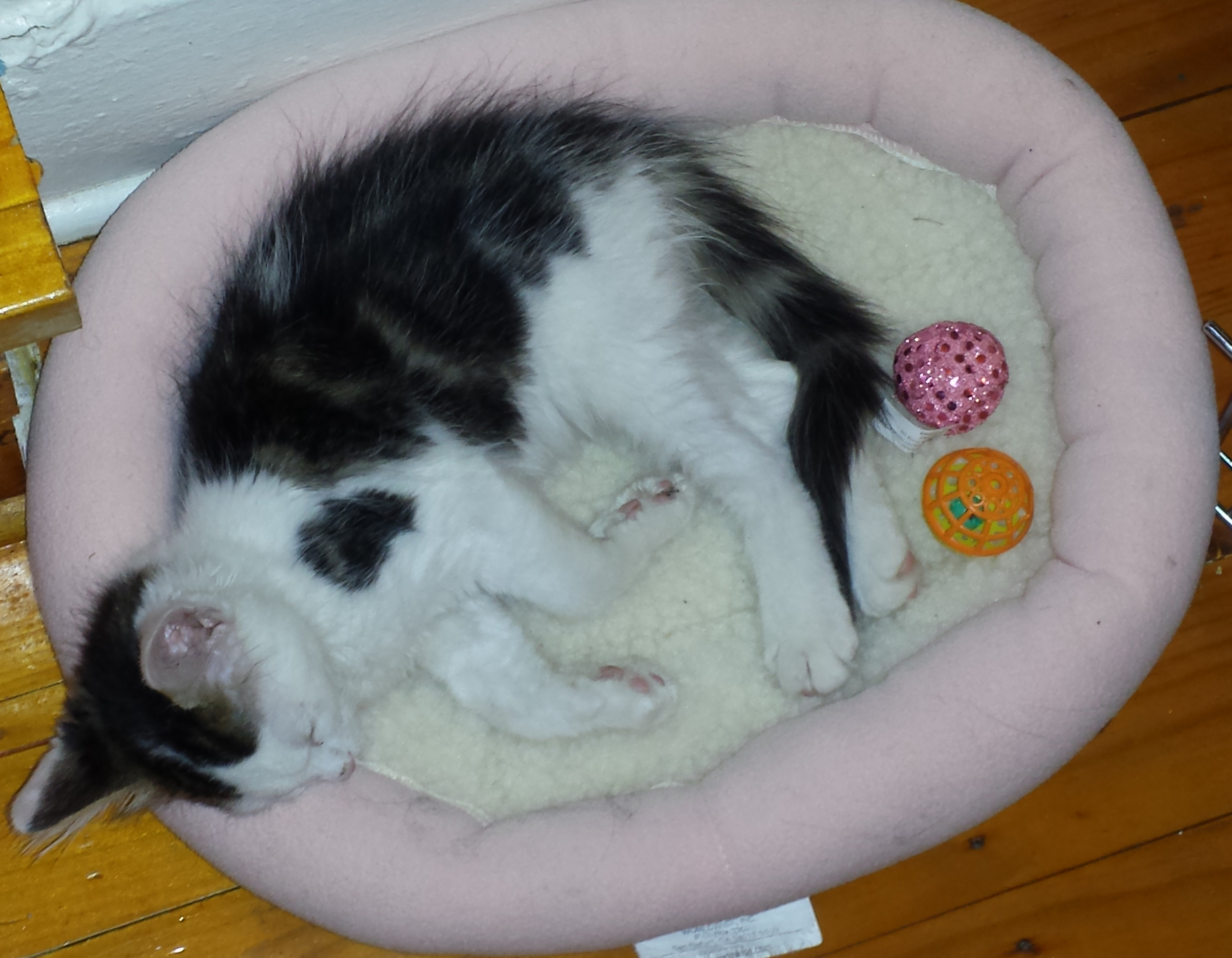Cat_Bed.jpg