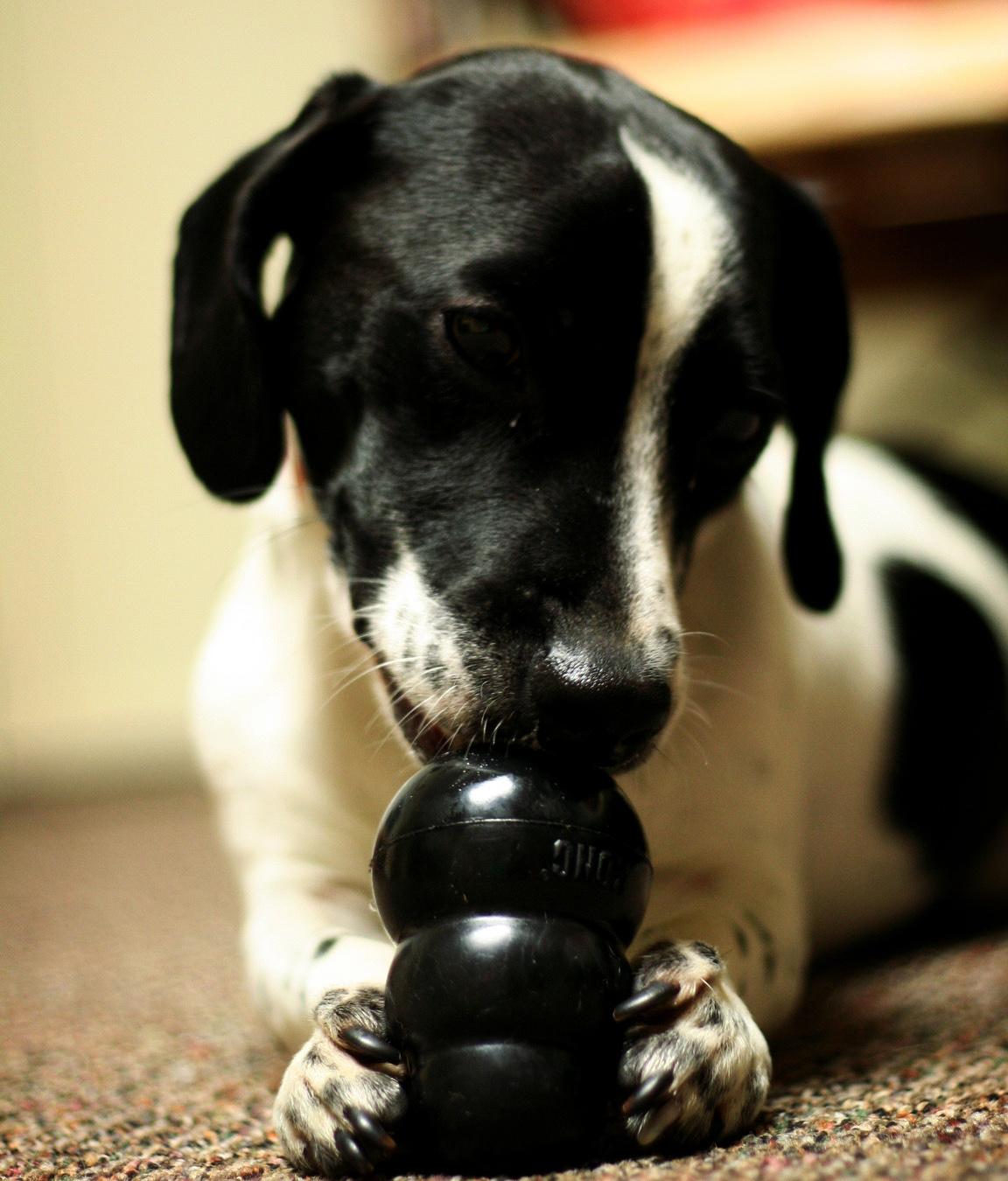 Dog_Toys.jpg