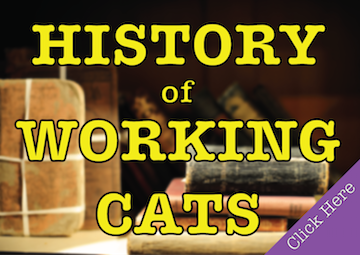 History_Working_Cats.png