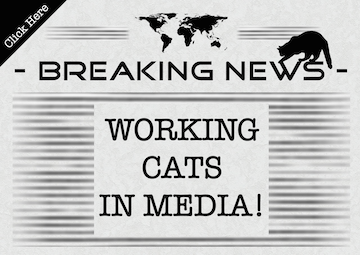 Working_Cats_Newspaper.png