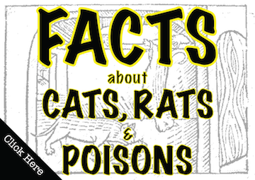 Cats_Facts-01.png