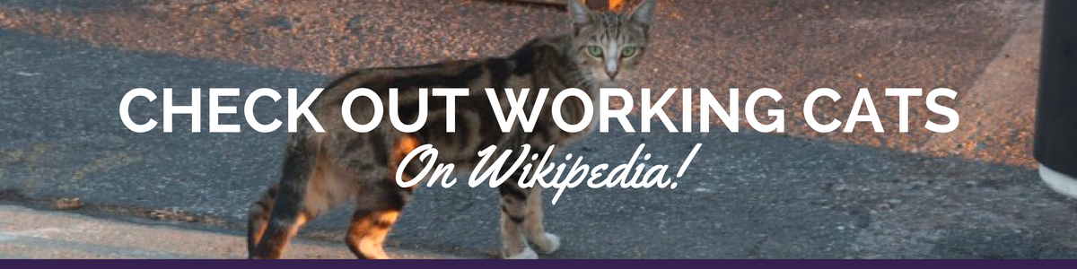 Check_out_Working_Cats3.png