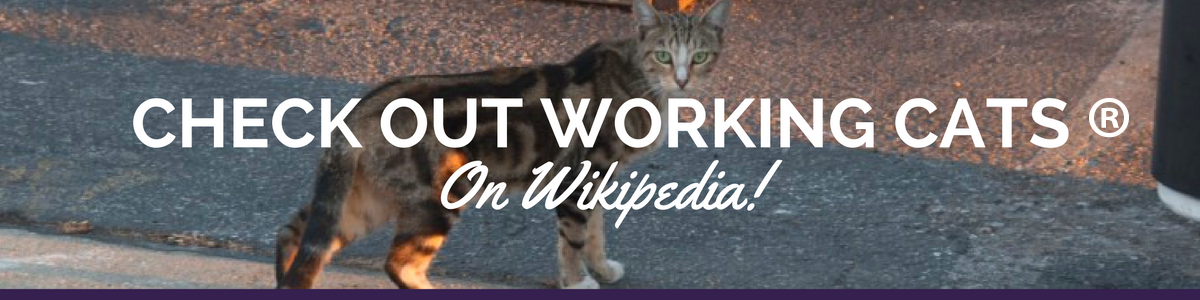 Check_out_Working_Cats_R.png