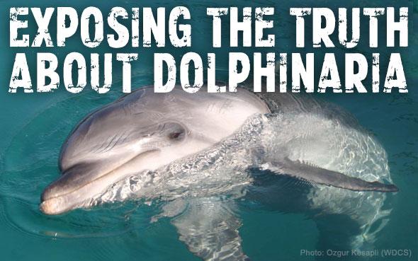 Dolphinaria-Free-Europe-Captive-Dolphin.jpg