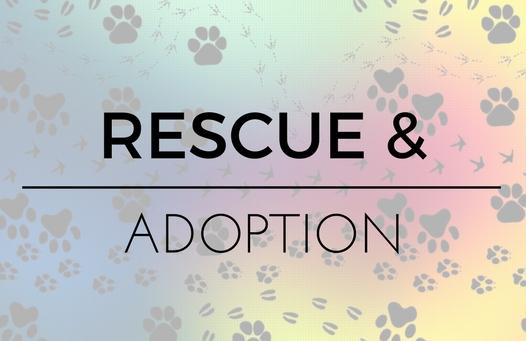 rescue_icon.jpg