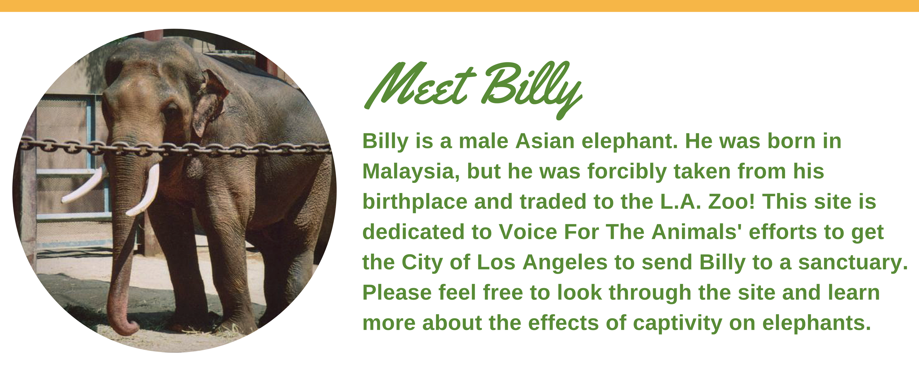 Meet_Billy6.png