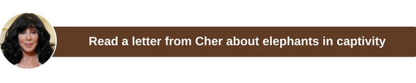 Cher123445566.png