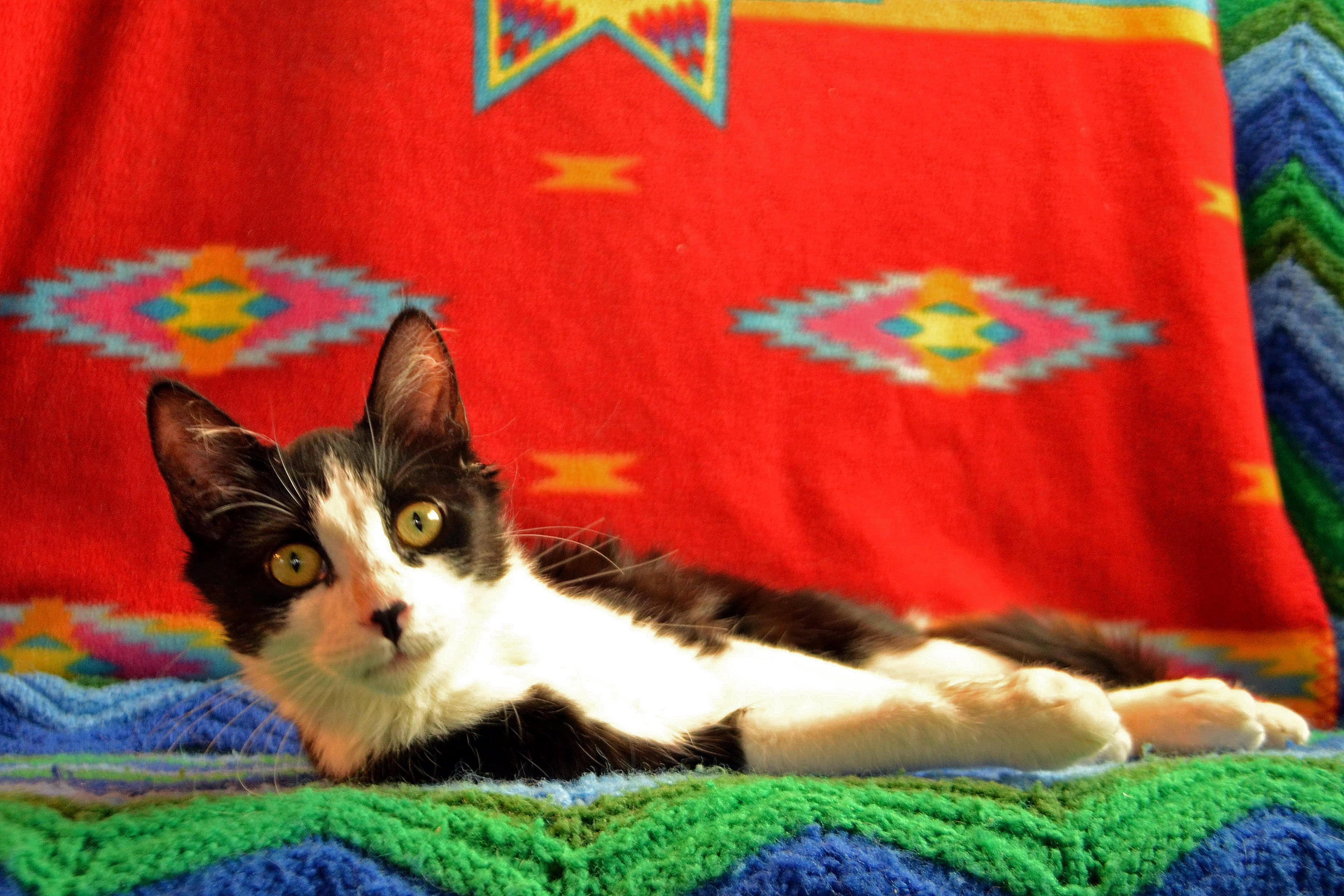 Frida4-min.jpg