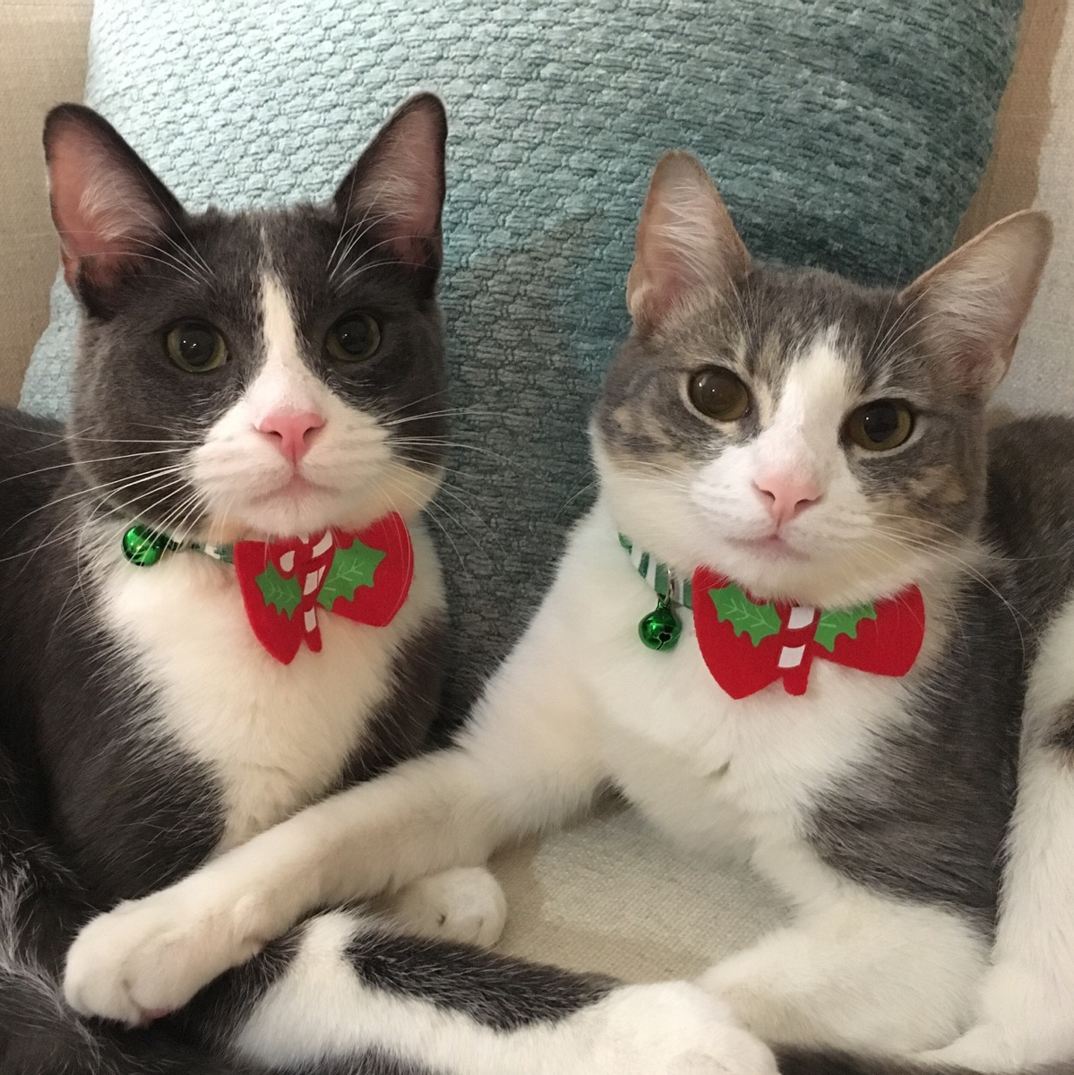 Ella_and_Sampson_(Renamed_Bella_and_Leo)_Dec__2016.jpg