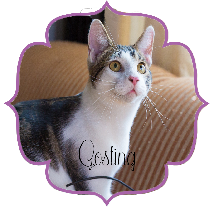 Gosling_Front.png