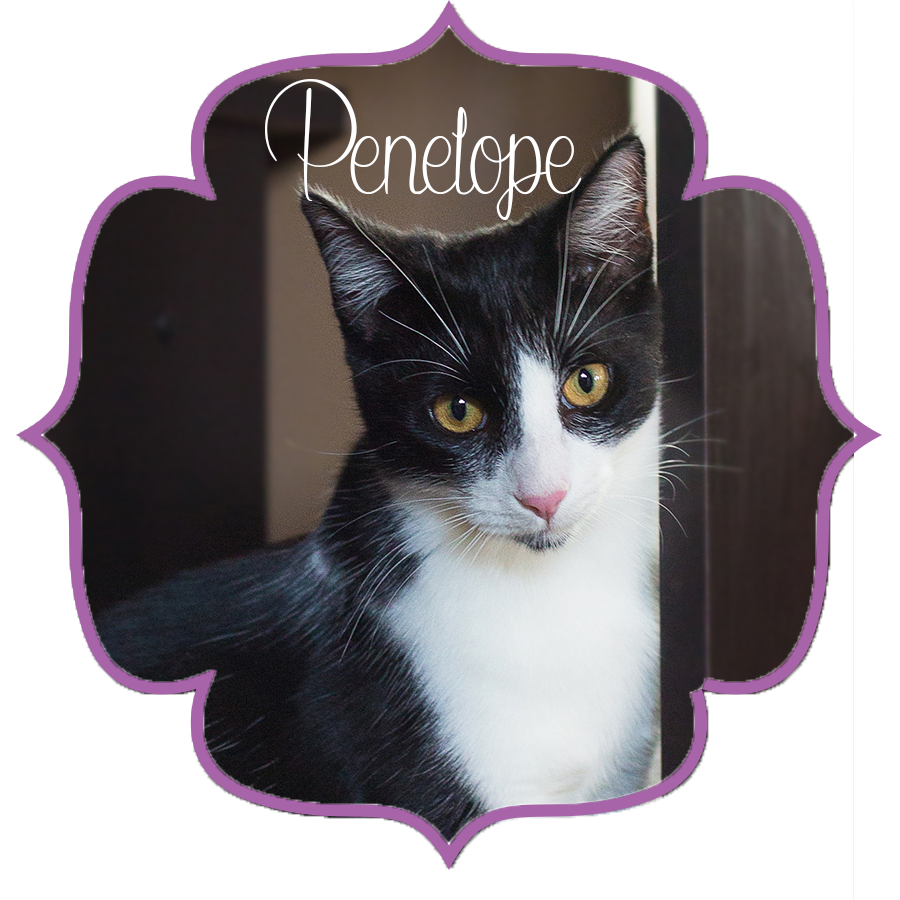 Penelope_Front.png