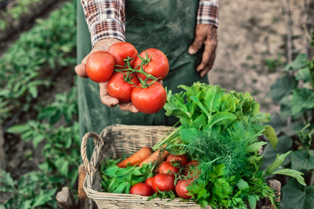 UPDATE: Arizona-Grown Fruit and Vegetable Incentive Bill Signed by Governor