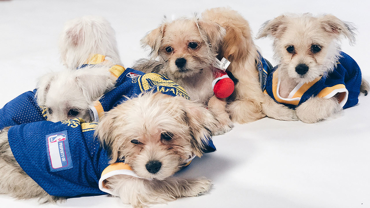 Dub_Nation_Pups.jpg