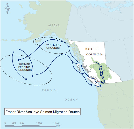 salmon_migration_routes.jpg
