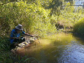 Measuring dissolved oxygen on a tributary of the Chilliwack River (Sts'elxwíqw' stó:lō)