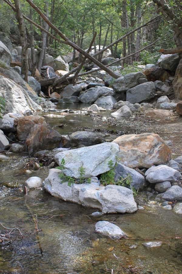 San_Antonio_Creek_.jpg