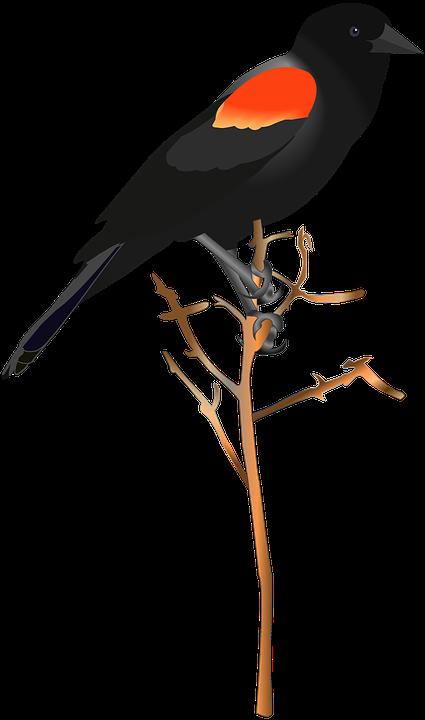 bird-2922839_960_720.png