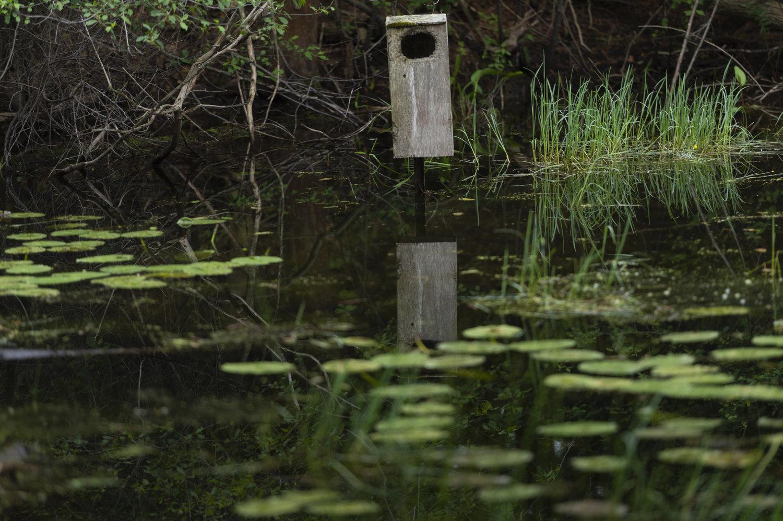 Hall's Pond Bird Box