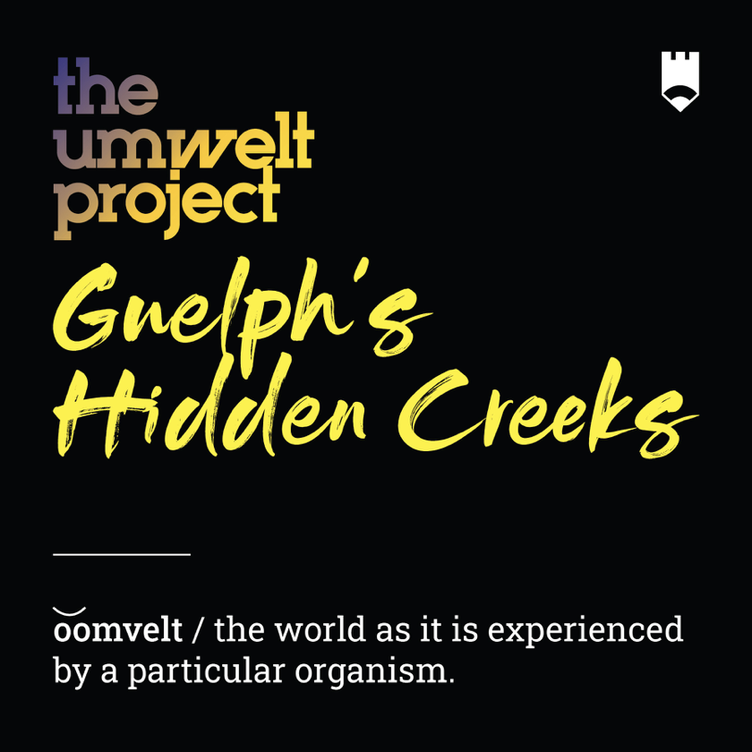 Umwelt_Project.png