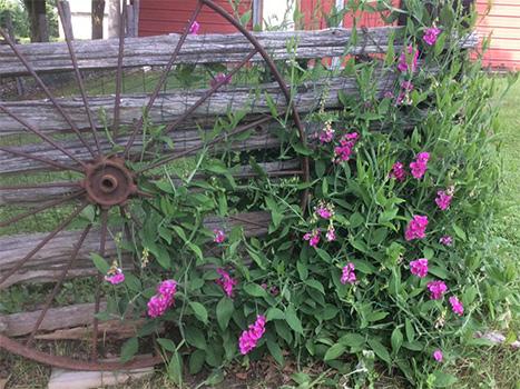 Perennial-delight-350px.jpg