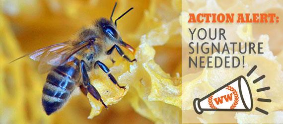 action_alert_pollinators.jpg