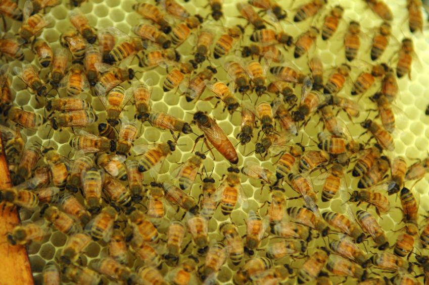 bees_knees.jpg