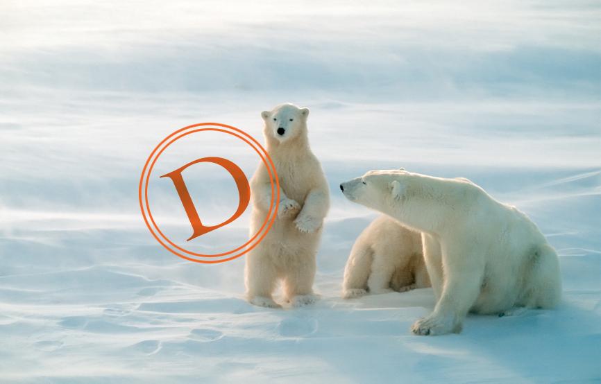 polar_bear_grade_d.jpg