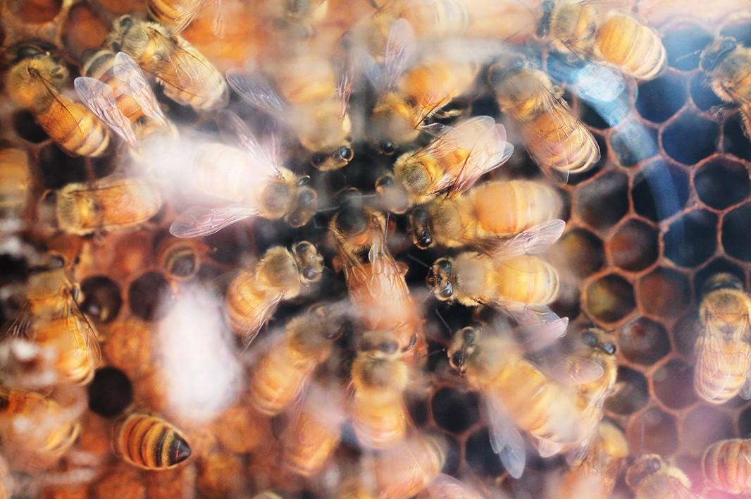 Bee_Edit_18.jpg