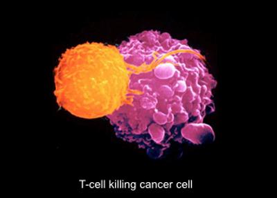 t-cells-thumb-700x502-124.jpg