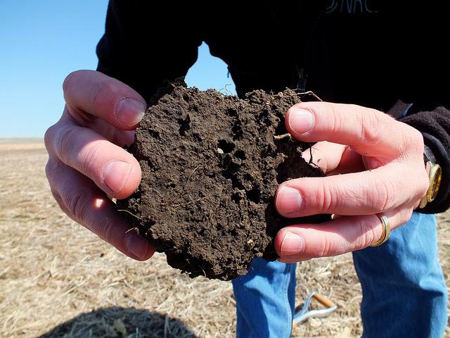 soil_pores_healthy_soil.jpg