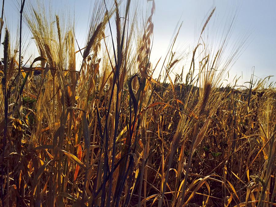 fallow_field2.jpg