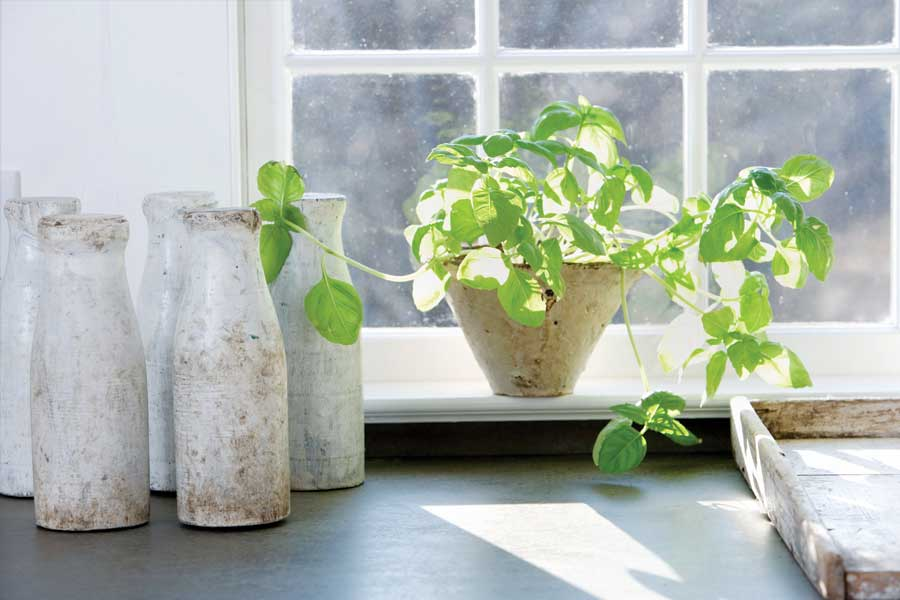 basil-windowsil.jpg