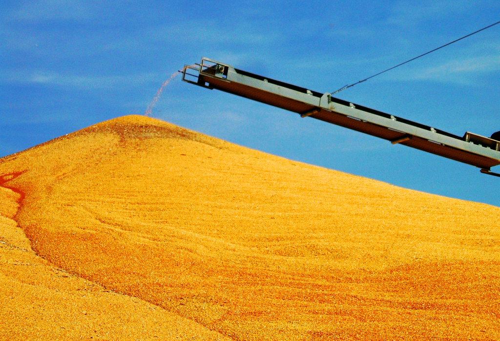 corn_.jpg