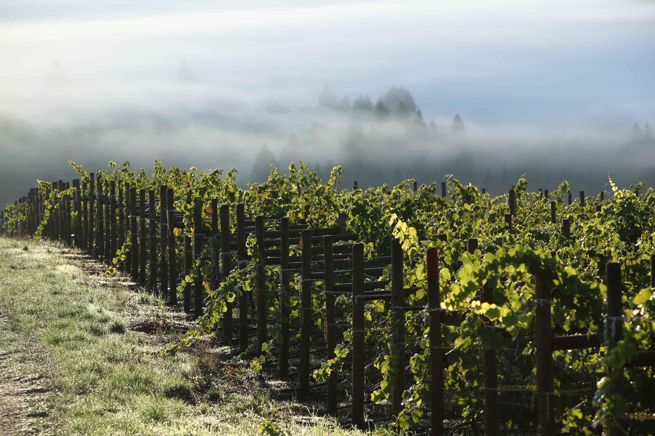 clay-vines-2275-1.jpg
