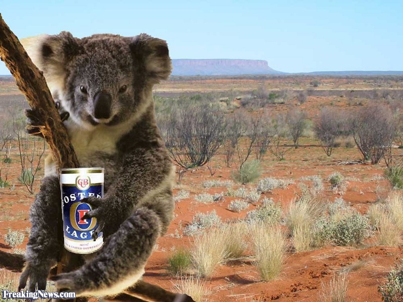 Koala-Drinking-Beer-in-a-Tree--127873.jpg