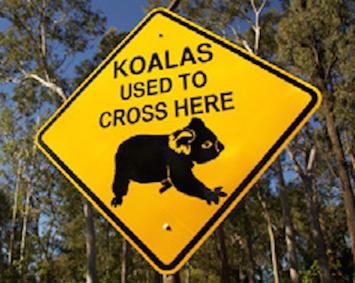 KoalaCrossing.jpg