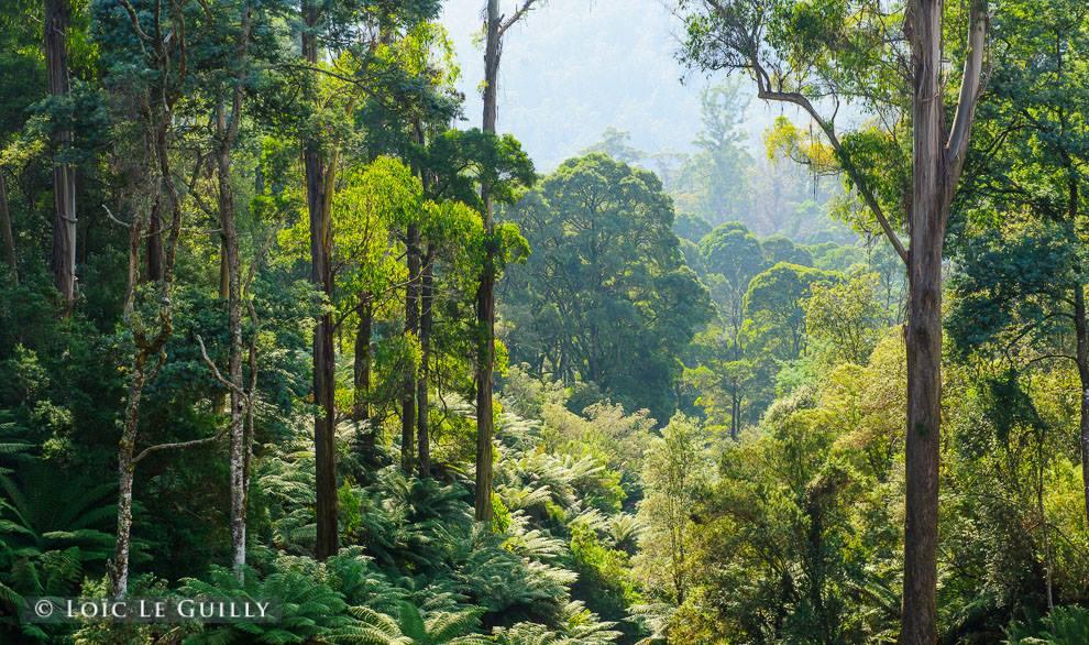 treatened forest tasmania