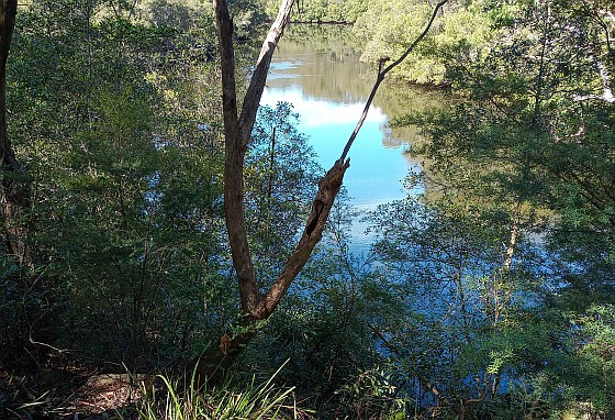 Lane_Cove_River_small.jpg