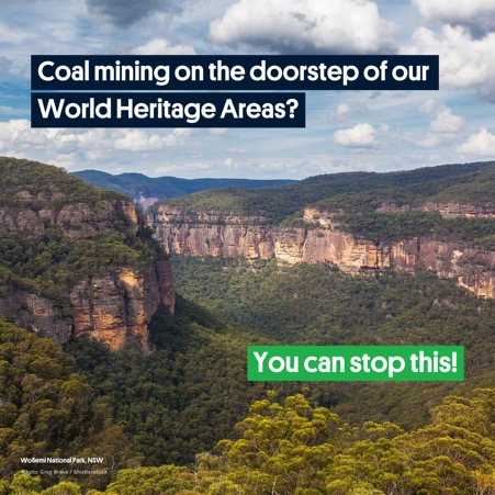 wollemi forrest pic with text that says we can stop coal mining here