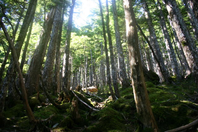 tongass_nf._usfs_photo.jpg
